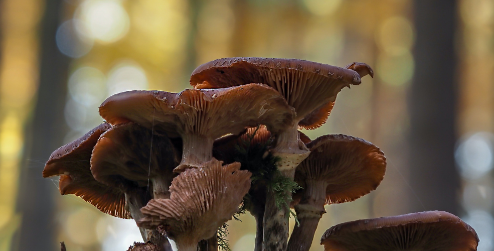 Psychedelics set to become game changer for mental health industry