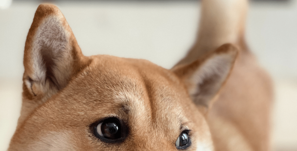 Much whimper, very shrink: Dogecoin drops 20% on Doge Day