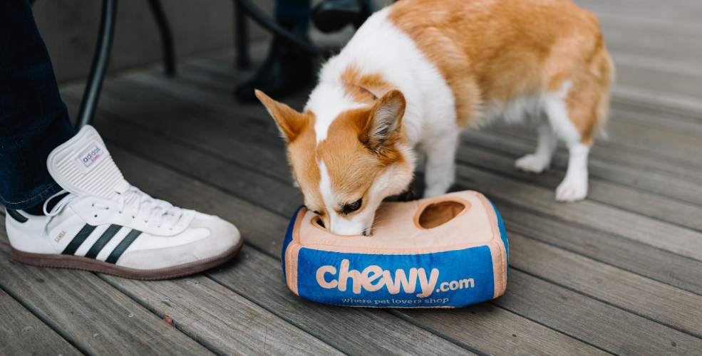 Chewy exceeds earnings expectations, so why aren't stocks soaring?