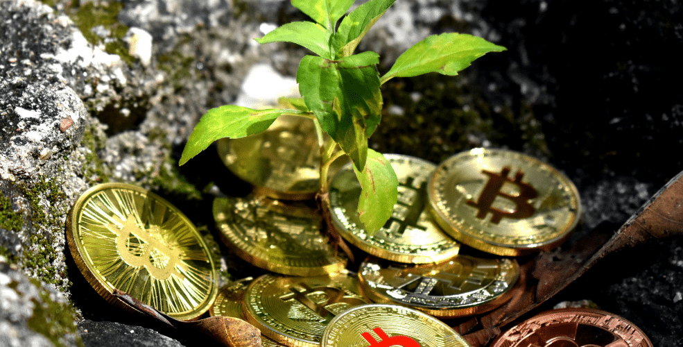 """How to invest in """"green crypto"""", the climate-friendly alternative to Bitcoin"""